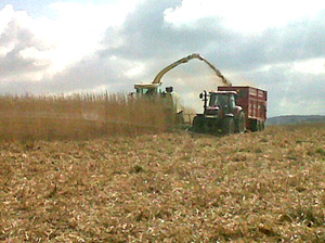 Miscanthus being harvested by Luke Furse Contractors on 7th April 2012 using a 12 row easy collect header