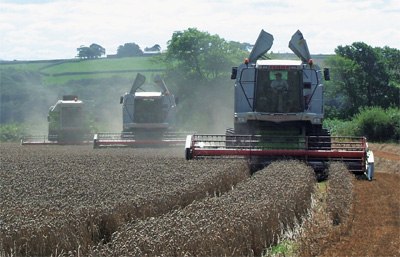 Winter Wheat being harvested at Dipper Mill, Shebbear, Devon by the 3 Claas Combines working as a team